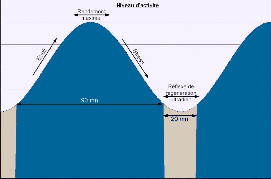 Le cycle Ultradien